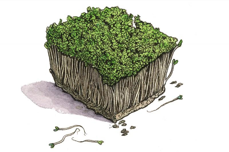 Broccoli-sprouts_3x2