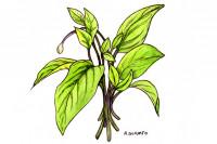 Cholesterol-spinach062_3x2