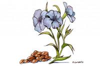 Flaxseed015_3x2