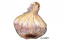 Garlic019_3x2