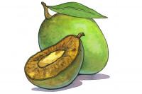 Irvingia-gabonesis-African-Mango_3x2