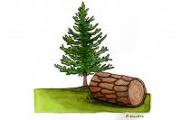 Pine-Bark-Extract003_3x2