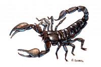 Scorpion-venom113_3x2