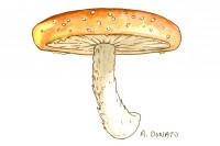 Shiitake-mushroom_3x2