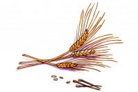 Wheat-germ-extract003_3x2