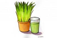Wheat-grass004_3x2