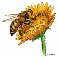 bee-pollen002